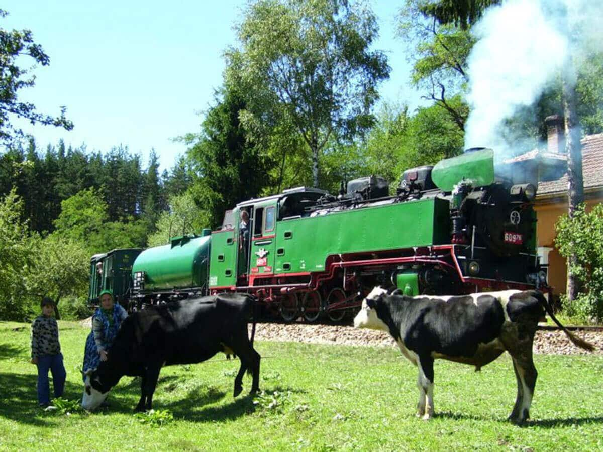 The Rhodope Narrow Gauge passing through a women and a boy and two cows