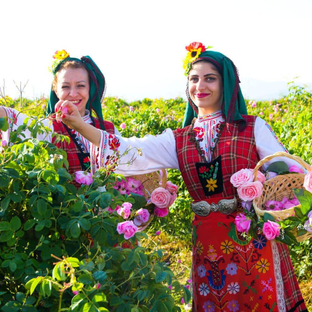Girls picking rose in the Rose Valley during the Rose Festival